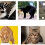 Как да разбера каква порода е котката ми